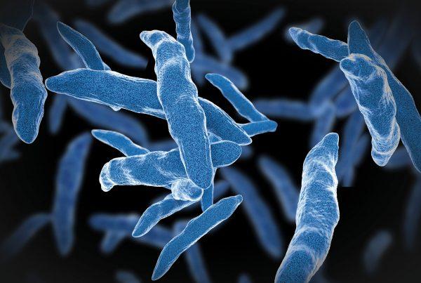 Header Infektionskrankheiten